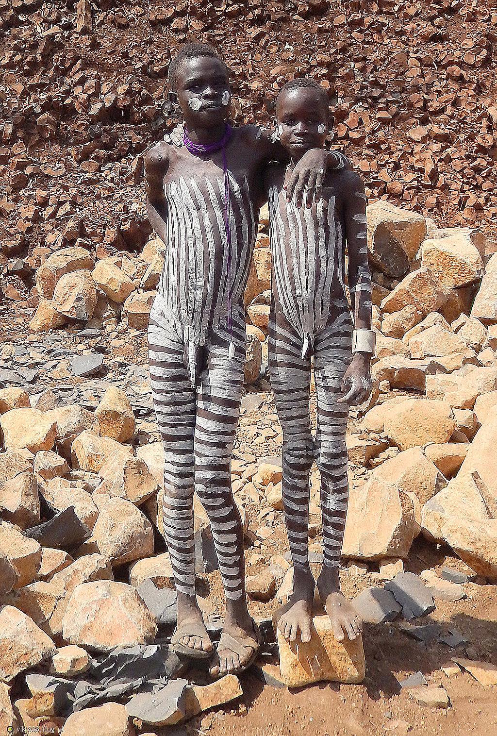 zebra to jest afrykańskie zwierzę, ale nie zawsze oczom swoim wierzę...