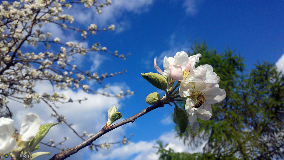 wiosna, wiosna