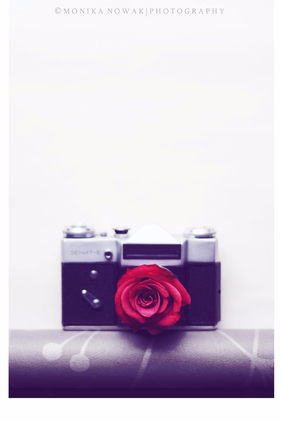 ... jak róża chłonie światło ...