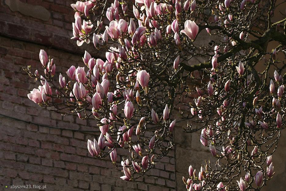 Uroki minionej wiosny....