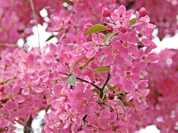 http://s19.flog.pl/media/foto_middle/11038373_juz-a-moze-dopiero.jpg