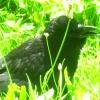 Miastowy mieszkaniec 2 :: Te ptaki zyja w srod ludz<br />i i sie nie boja .