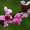 Wiosenna gałązka dla Cieb<br />ie Beatko w rewanżu