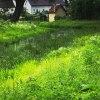 woda rzejka i trawa :: dominujący kolor zielony