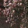 Uroki minionej wiosny.... :: Już przeminęły , a szkoda<br /> , nie łatwe w fotografii<br /> , ale zawsze wdzięczny t<br />emat . Pozdrawiam od