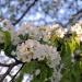 Wiosna:)
