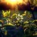 Zachód Słońca... :: Witam. Dziś zdjęcie sprze<br />d 2-3 tygodni i pytanie -<br /> lepszy oryginał czy &quo<br />t;lekka&quot; obróbka