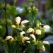 Kwiaty. :: Miłej reszty niedzieli. J<br />a ją dopiero zaczynam. :)<br />   Pozdrawiam, Janettt