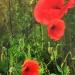 """""""...Kwiaty , bukiety kwiatów, barw...."""""""